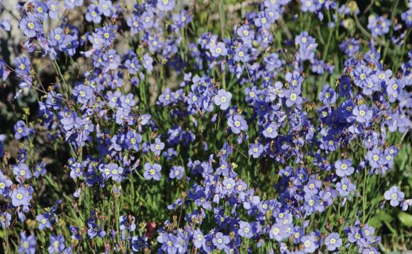 Wild Flower 05